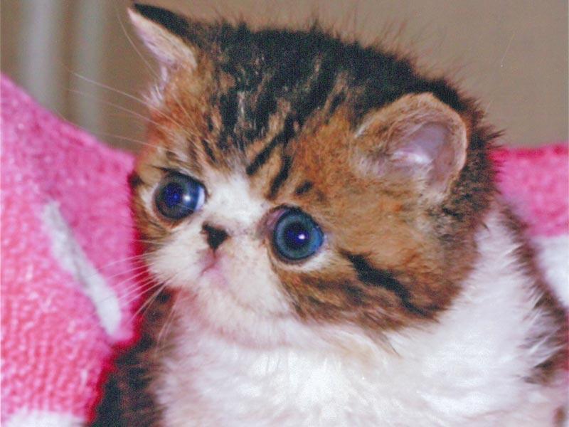 キティ猫専門店