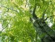 緑化樹木卸売センター