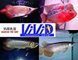 株式会社びびっど(ViViD)