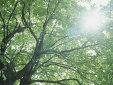 森直樹法律事務所