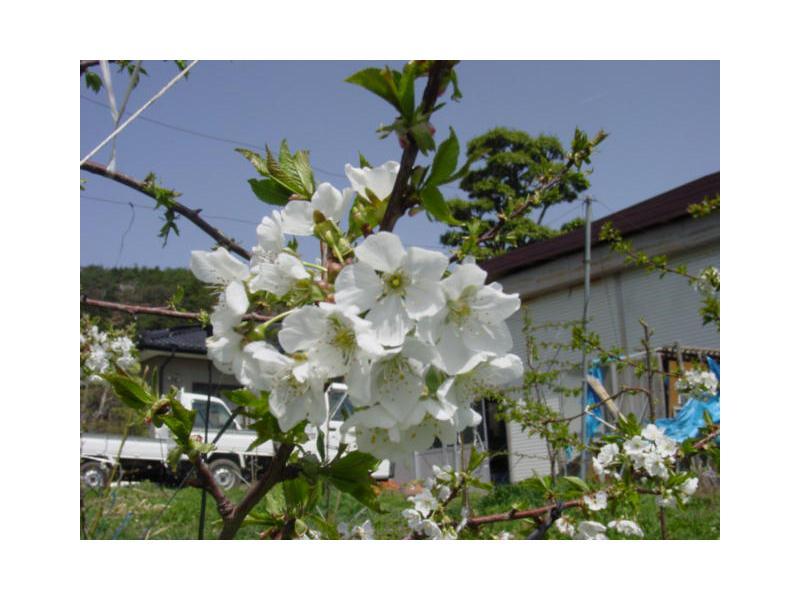 丸東荘果園