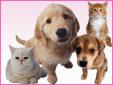あきよし動物診療所