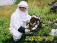 ハチのアソウ