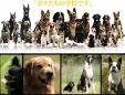中部警察犬訓練所