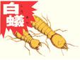 有限会社今村化学工業白蟻研究所中津支店