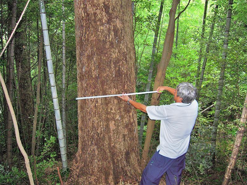 とくしま森林立木総合鑑定所